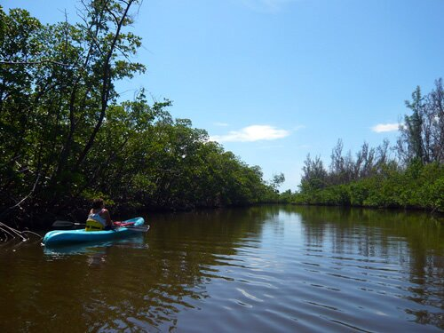 Kayaking in the mangroves of Hollywood